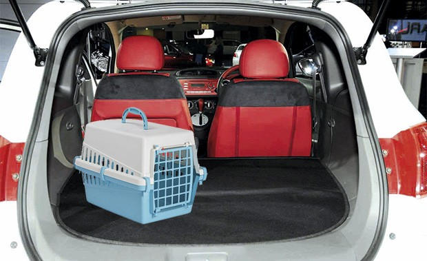 Transporte de animais no carro