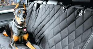 """Nicho de acessórios para transporte de """"pets"""" merece ser explorado"""